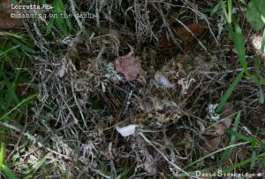 Broken nest